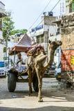 Такси верблюда в Pushkar Стоковые Фотографии RF