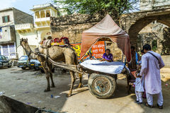 Такси верблюда в Pushkar Стоковые Фото