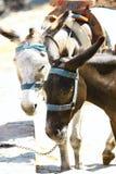 таксомотор lindos s Греции осла стоковая фотография