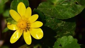 Так зеленый цвет и желтый цвет Стоковое Фото