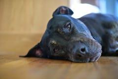 так doggone утомлял Стоковое Фото