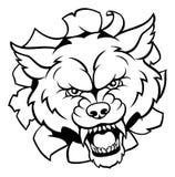 Талисман спорт волка ломая предпосылку Стоковые Фотографии RF