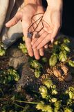 Талисман Svarog держатся в руках На заднем плане хмели, семена пшеницы, грецкие орехи, alatyr стоковые фото