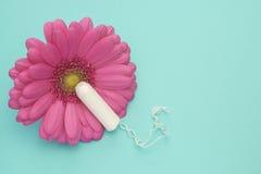 Тампон менструации, розовый цветок маргаритки gerbera Фото зачатия гигиены женщины Мягкая нежная защита на дни женщины критически стоковые изображения
