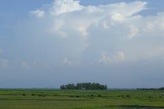 Там пасите поле на озере noi thale, phatthalung, стоковая фотография rf