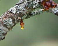 Тангаж на дереве Стоковые Фото