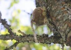 Тангаж на дереве Стоковые Фотографии RF