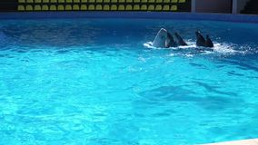 Танец дельфина видеоматериал