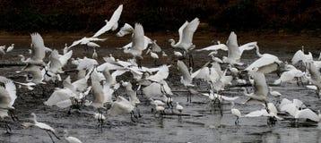 Танец Gooses Стоковые Фото