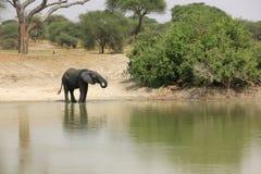 Танзания, Африка, живая природа Стоковое Фото