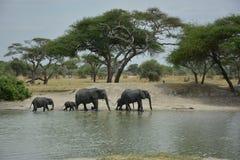 Танзания, Африка, живая природа стоковое фото rf