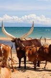 Танзания стоковые изображения