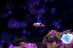 Танк аквариума кораллового рифа с много рыбами Стоковое Изображение RF