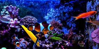 Танк аквариума кораллового рифа с много рыбами Стоковое Изображение