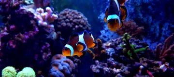 Танк аквариума кораллового рифа с много рыбами Стоковое фото RF