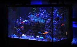 Танк аквариума кораллового рифа Стоковая Фотография