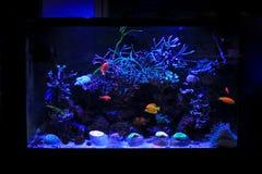 Танк аквариума кораллового рифа Стоковая Фотография RF