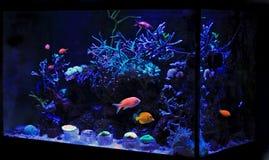 Танк аквариума кораллового рифа Стоковое Изображение RF