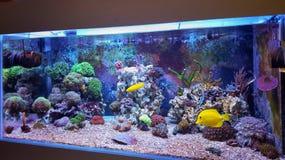 Танк аквариума кораллового рифа Стоковое Изображение