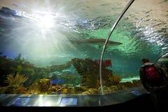 Танк акулы на аквариуме Канаде Ripley Стоковые Изображения RF