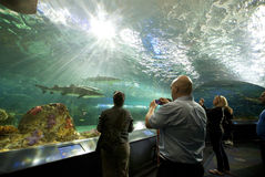 Танк акулы на аквариуме Канаде Ripley Стоковое Изображение RF