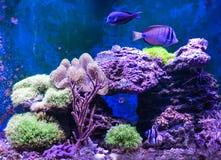 Танк рифа, морской аквариум вполне рыб и заводы Танк заполненный с водой для держать подводных животных в реальном маштабе времен Стоковое Изображение