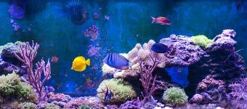 Танк рифа, морской аквариум вполне рыб и заводы Танк заполненный с водой для держать подводных животных в реальном маштабе времен Стоковое фото RF