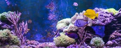 Танк рифа, морской аквариум вполне рыб и заводы Танк заполненный с водой для держать подводных животных в реальном маштабе времен Стоковые Фотографии RF