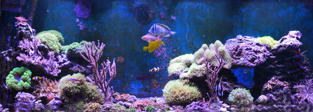 Танк рифа, морской аквариум Танк заполненный с водой для держать подводных животных в реальном маштабе времени Gorgonaria, вентил Стоковое фото RF