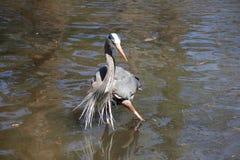 Танцевать в воде Стоковые Фото