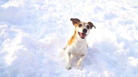 Танцевать играющ активную собаку Идти игр зимы свежий снаружи Замедленное движение видео сток-видео