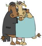 танцевать коров медленный Стоковые Фото