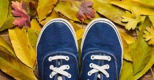 Тапки битника голубые на деревянном поле против предпосылки желтых упаденных листьев Стоковое Изображение RF