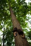 Тапочки пригвозженные к хоботу дерева стоковые изображения