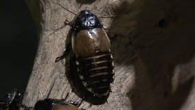 Тараканы, плотв, насекомые, природа акции видеоматериалы