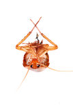 таракан мертвый стоковая фотография
