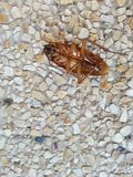 таракан мертвый Стоковые Изображения