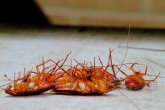 Таракан на конкретном поле Стоковые Фотографии RF