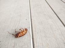 Таракан убитый на поле стоковые изображения rf