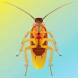 таракан Стоковое Фото