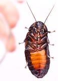 таракан стоковая фотография