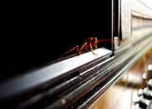 таракан Стоковые Изображения