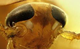 таракан Стоковые Фото