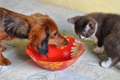 Блюдо кота и собаки Стоковые Изображения RF