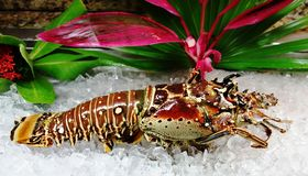 Тарелка от кипеть омара Стоковая Фотография RF