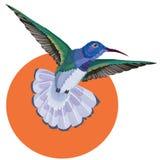 Татуировка колибри, картина акварели Стоковые Изображения