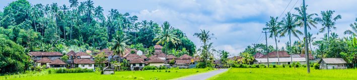 Таунхаусы приближают к полю tarrace риса под пальмами в районе Sidemen bali Индонесия стоковое фото rf