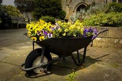 Тачка вполне цветков в саде стоковые изображения rf
