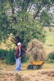 Тачка старшего человека заполняя сена с Стоковые Изображения