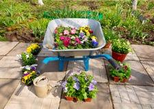Тачка с в горшке цветками и садовыми инструментами стоковое фото